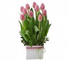 «Романтично» Тюльпаны с луковицами в праздничной упаковке.Приятный и полезный подарок. Доставка в Мингрельскую.