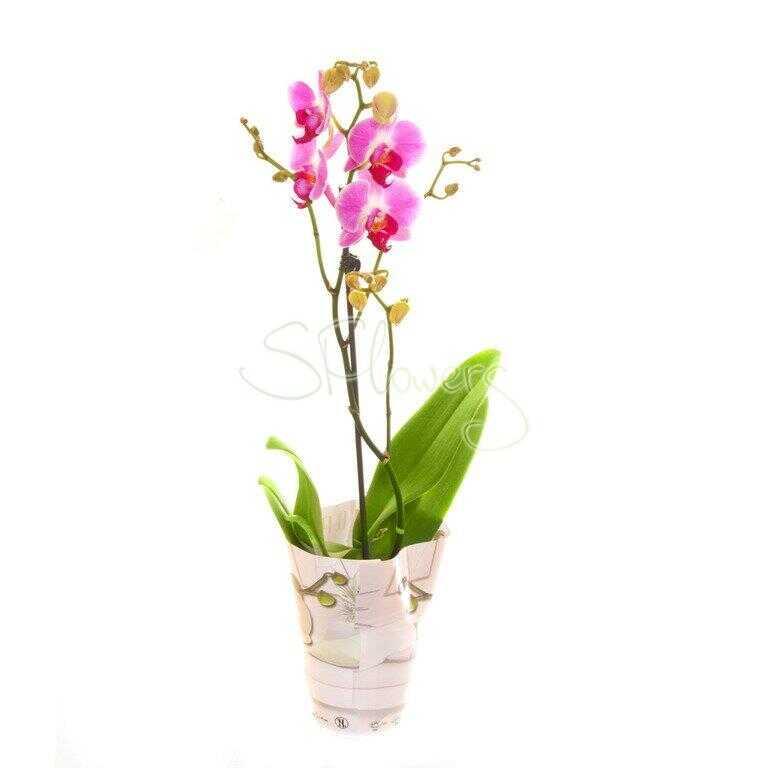 Комнатные растения: вечная весна и здоровье на подоконниках