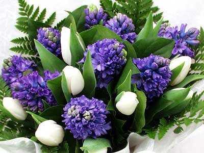 Голубые росы