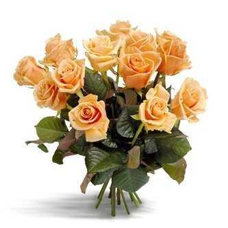 Первоклассные персиковые розы