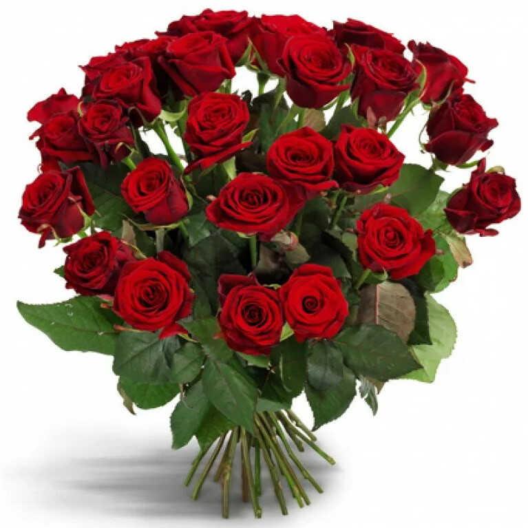 Первоклассные красные розы