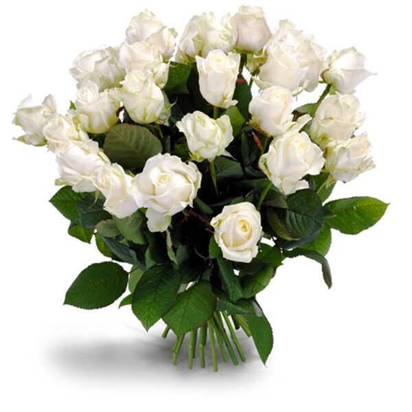 Первоклассные белые розы