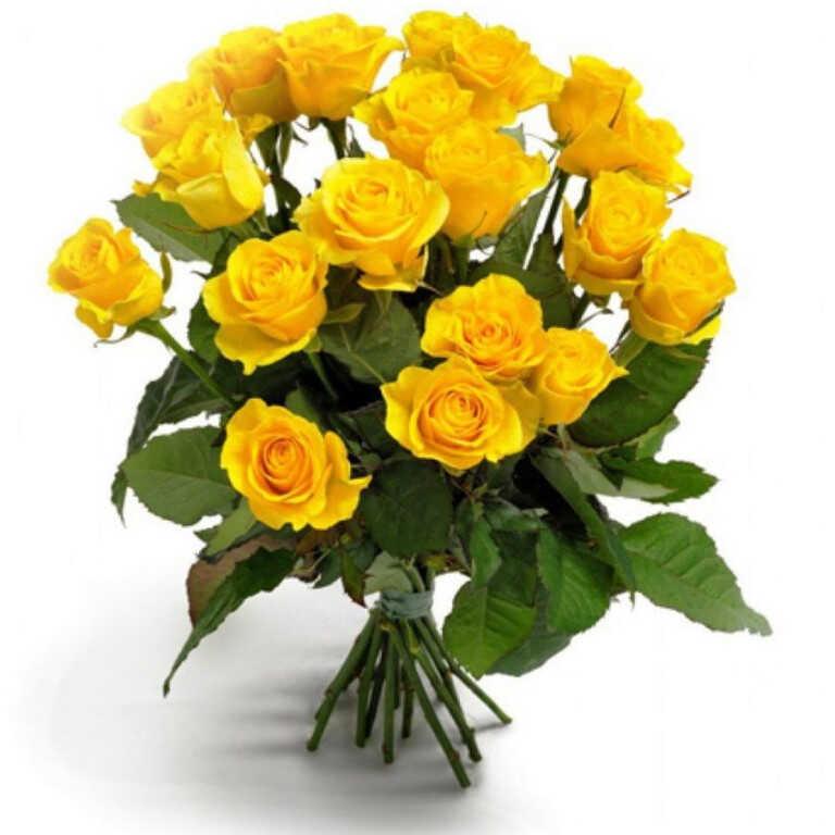 Первоклассные желтые розы