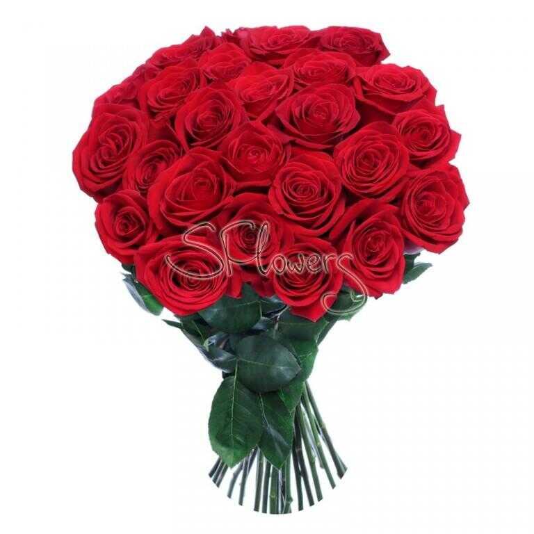 Первоклассные алые розы