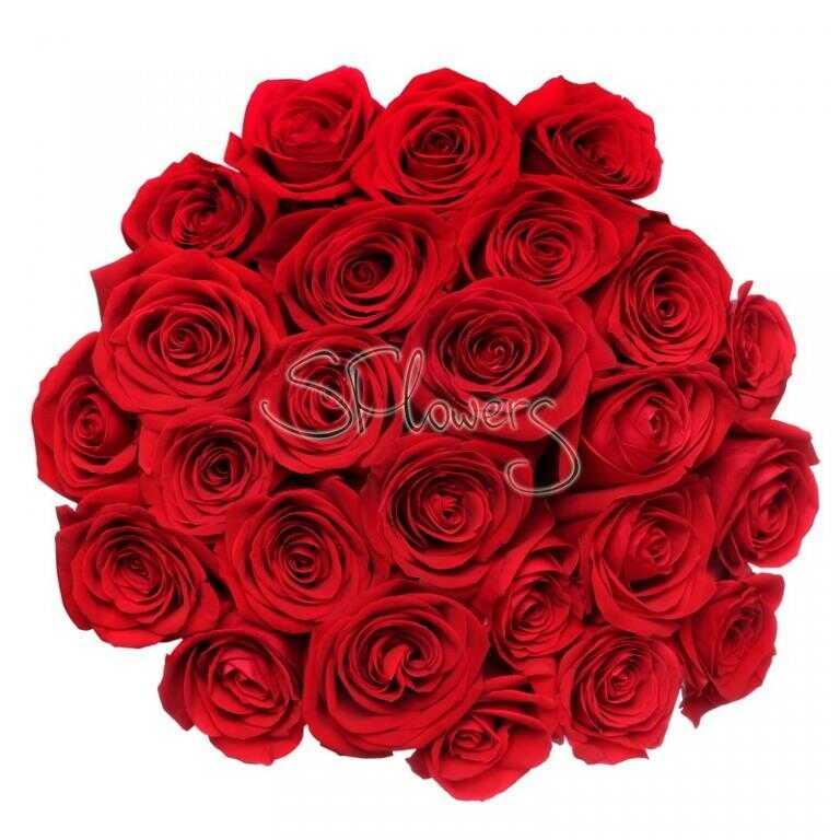 Свежие красные розы