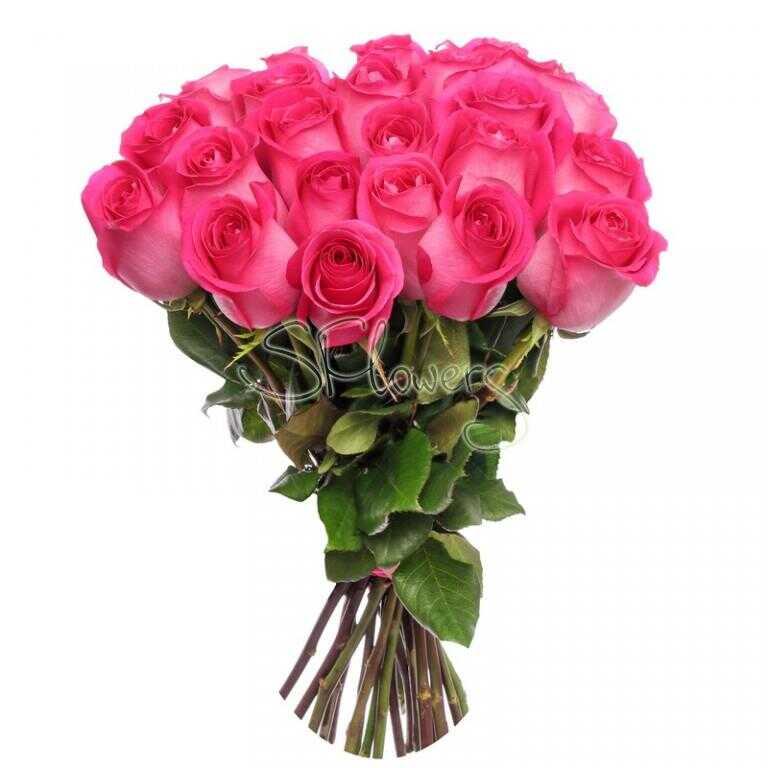 розы малиновые фото