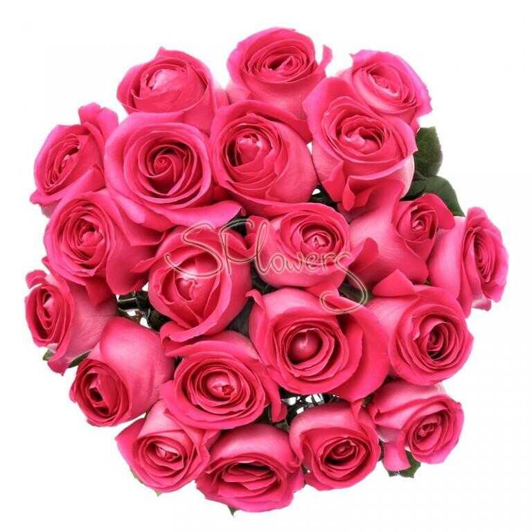 Свежие малиновые розы